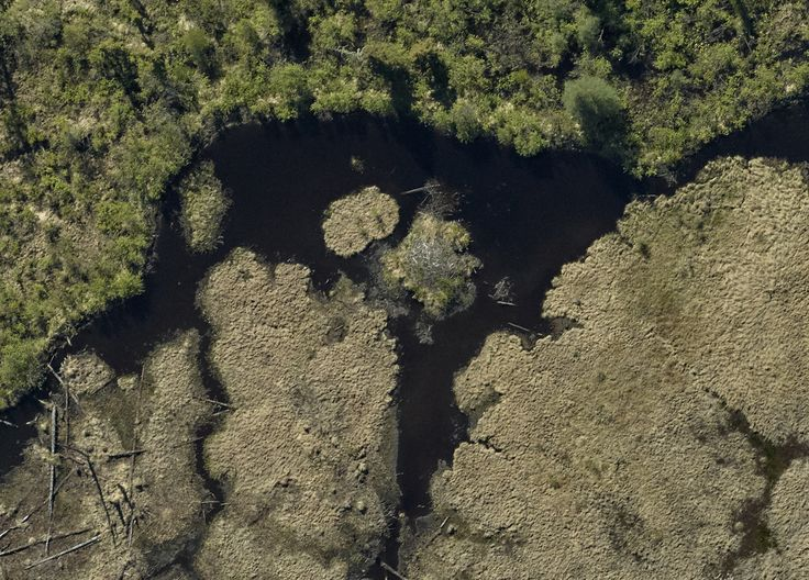 Cool shot of a beaver dam on one of our recent surveys outside of Thunder Bay