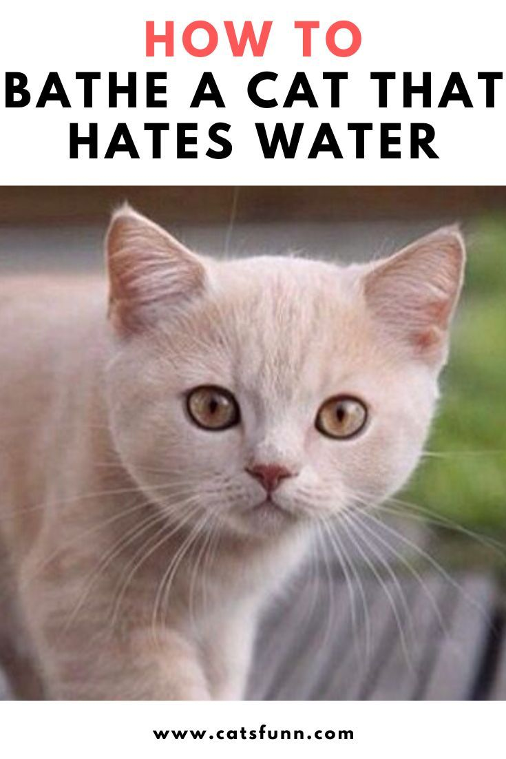 Tips For How To Bathe Your Cat In 2020 Cats Funny Cats Animals
