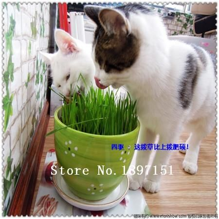 [Visit to Buy] Big sale Foliage plant seeds , cat grass seeds, wheat seeds,about 100 particles #Advertisement