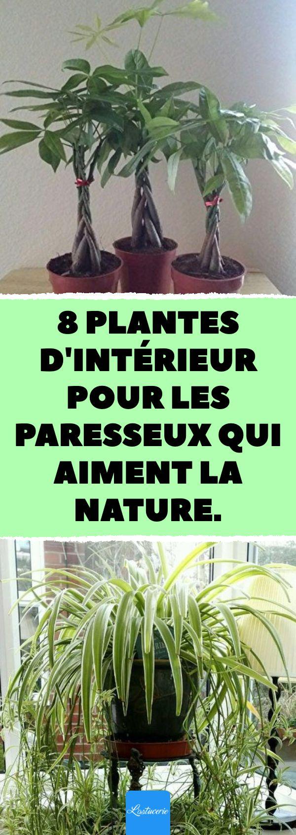 eight plantes d'intérieur pour les paresseux qui aiment l. a. nature. #plantes #intér…
