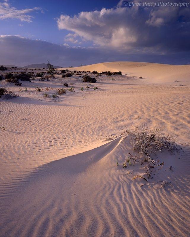 Dunas de Corralejo. Isla de Fuerteventura. Islas Canarias. España