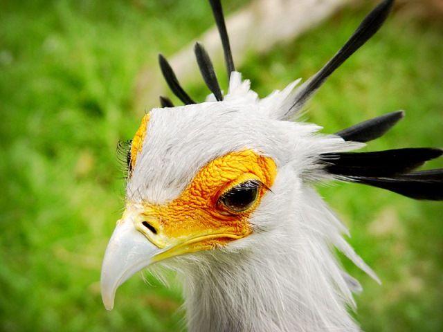 World of Birds Hout Bay