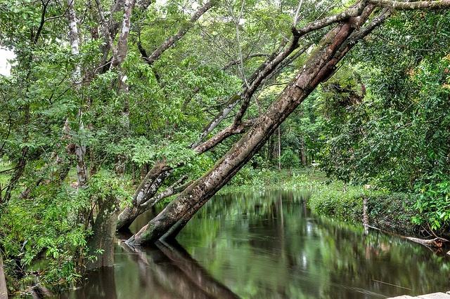 Suriname, South America