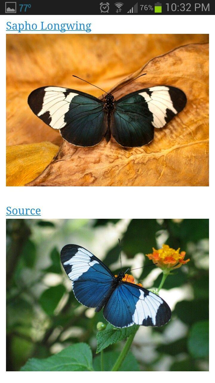 123 best butterflies images on pinterest | butterflies, butterfly