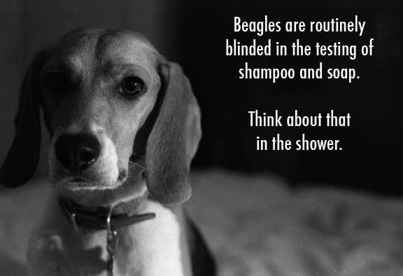 Stop Animal Cruelty Quotes | antitesting2