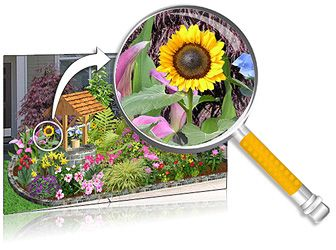 Plants for Landscaping Software