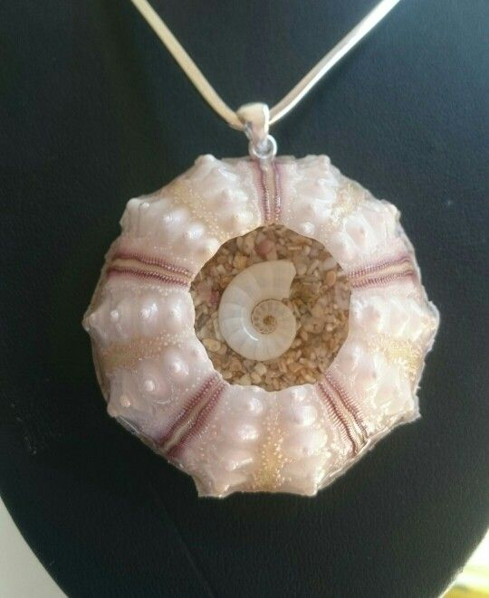 Pencil sea urchin pendant with ramshornshell centre. Sterling silverbail.