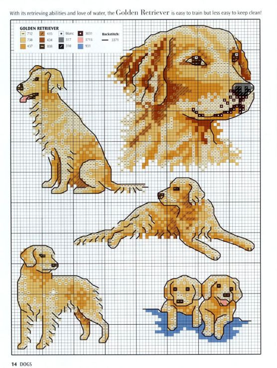 Cross-stitch Golden Retrievers...  Gallery.ru / Foto # 1 - Animal mir.400 retratos y motivos para el bordado - frango