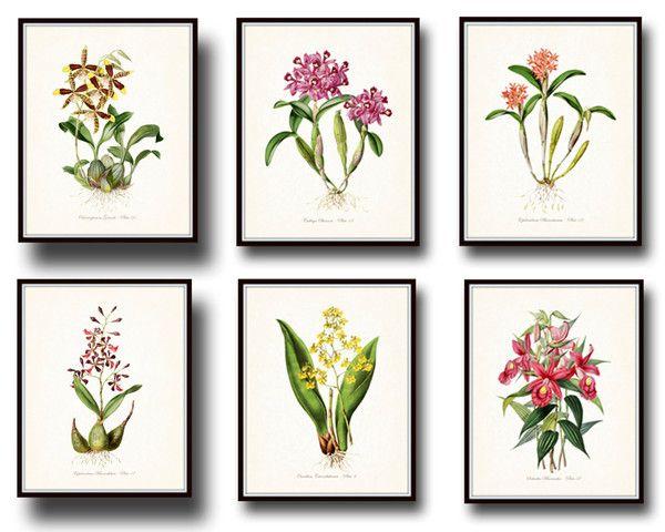Tropical Orchids Botanical Print Set No. 4