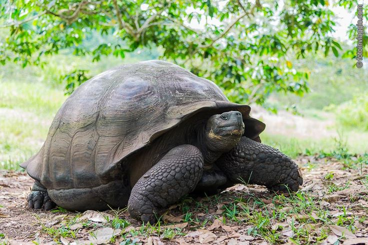 Ecuador - Isole Galàpagos - Santa Cruz e le tartarughe giganti
