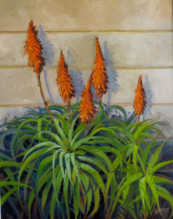 Krantz Aloe in Oils. Indigenous succulent that grows naturally along highways in the Southern Cape of South Africa.