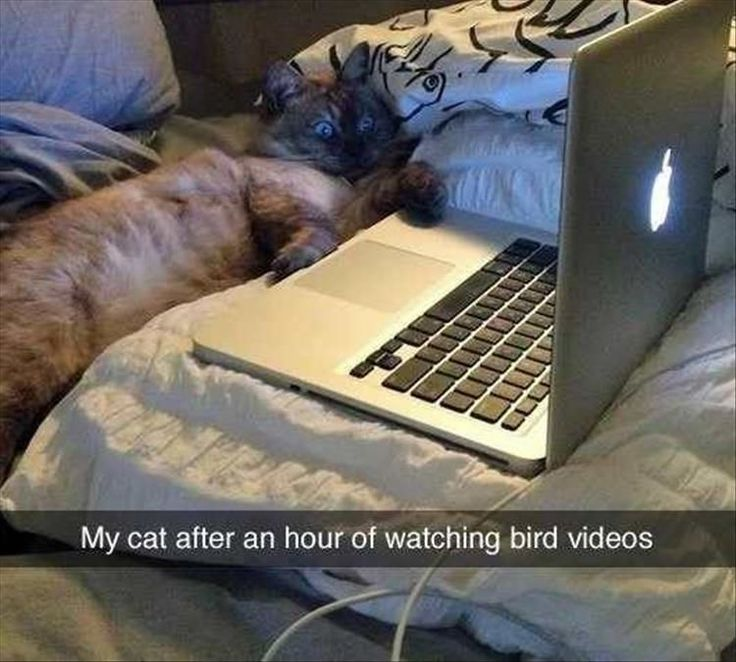 Funny Animal Pictures Of The Day - 17 Images