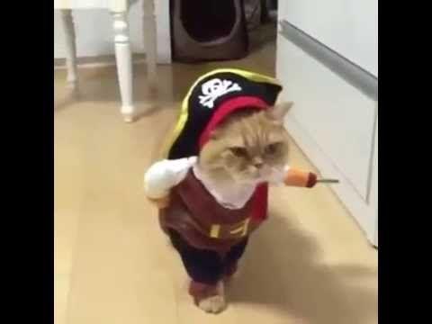 Booty music video gato - 4 5