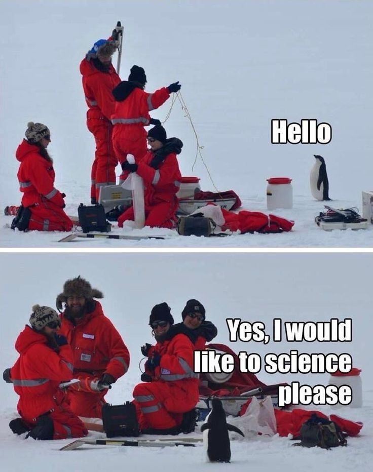 science penguin | I love how all of these adults can't help but stop to see and smile at the sight of the penguin.