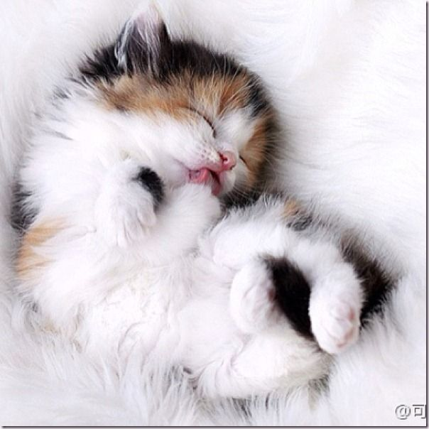 Kitty World: Really Cute Kitten Pictures