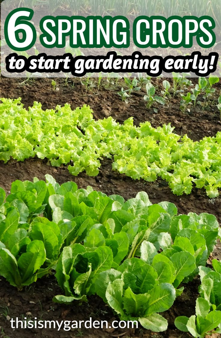 6 Great Spring Crops To Get Your Garden Growing Early In 2020 Spring Vegetables Spring Crops Growing Vegetables