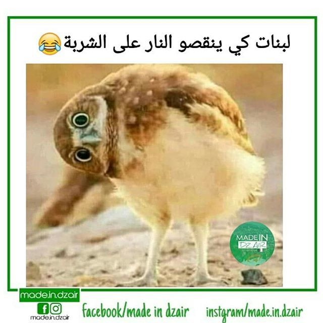 صور مضحكة و طريفة و أجمل خلفيات مضحكة Hd بفبوف Fun Quotes Funny Funny Arabic Quotes Funny Qoutes