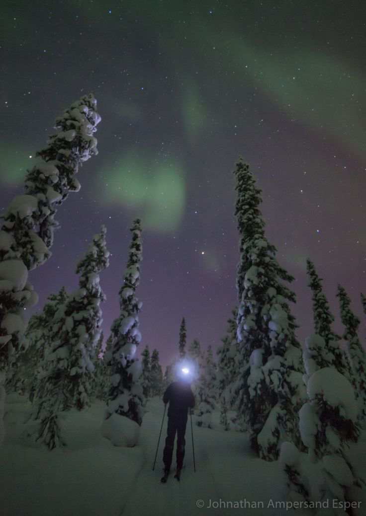Cross country skiing under the aurora borealis through the snowy forest near Kiruna, Sweden.