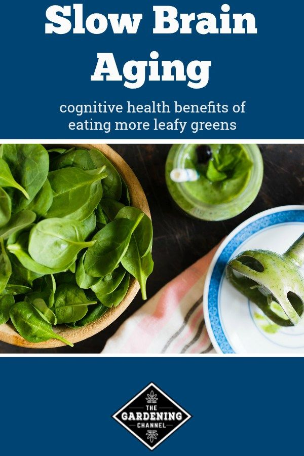 learn the cognitive health benefits of leafy greens from a study that showed leafy greens to slow brain aging up to 11 years