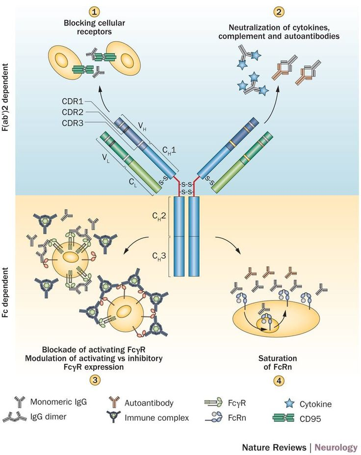 Intravenous immunoglobulin in neurology—mode of action and clinical efficacy : Intravenous immunoglobulin (IVIg)—a preparation of polyclonal serum IgG pooled from thousands of blood donors—has been used for nearly three decades, and is proving to be an efficient anti-inflammatory and immunomodulatory treatment for a growing number of neurological diseases. Evidence from controlled clinical trials has established IVIg as a first-line therapy for Guillain–Barré syndrome, chronic inflammatory…