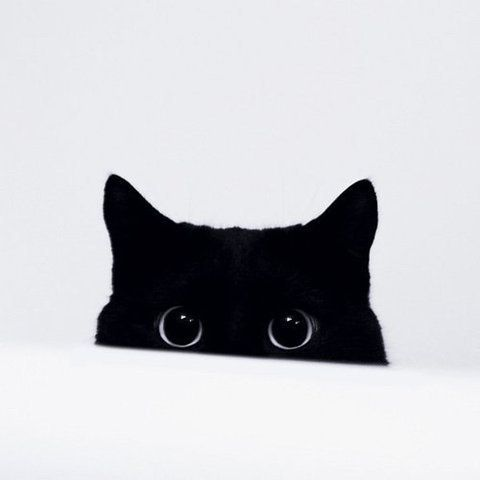 I have a weakness for black cats now.