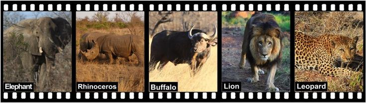 Part 1 of 3: The Big 5  South Africa's largest tourism product is undoubtedly the Big 5.