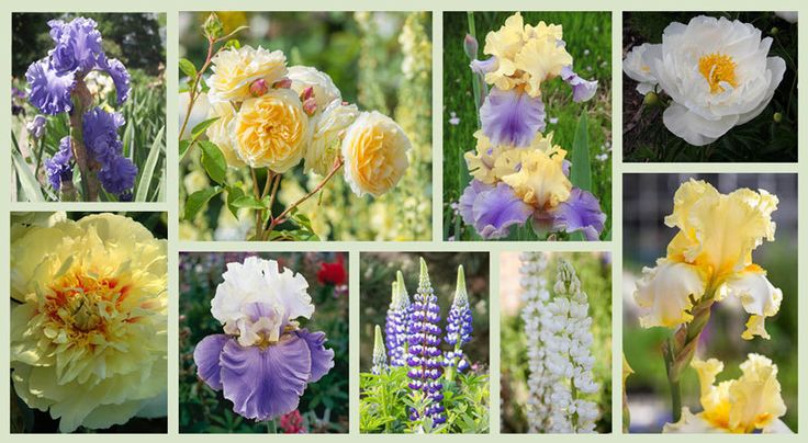 Border ideas perennial planting perennial combination for Perennial plant combination ideas
