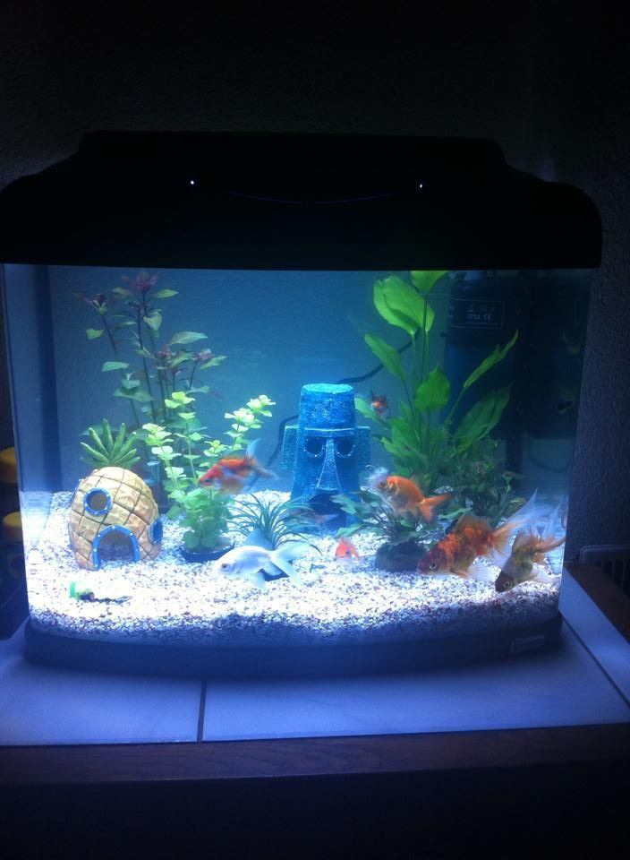 Spongebob inspired fish tank wantwantwant pinterest for Spongebob fish tank
