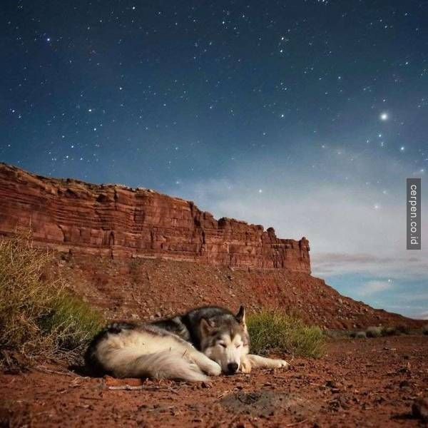 Keliling Dunia Dengan Anjing Peliharaan Itu Sesuatu Banget Ya!