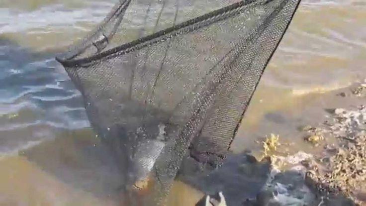 The kid caught huge carp, Пацан поймал огромного карпа