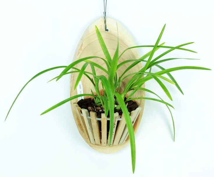 Orchidmate™ orchid supplies – Wood baskets | Orchidmate Orchid Supplies