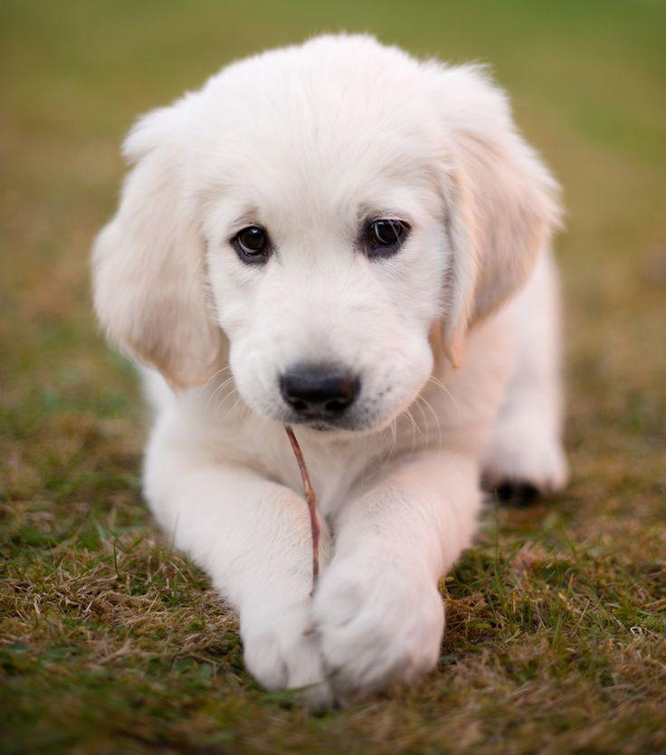 Eu quero um!                                                                                                                                                                                 Mais