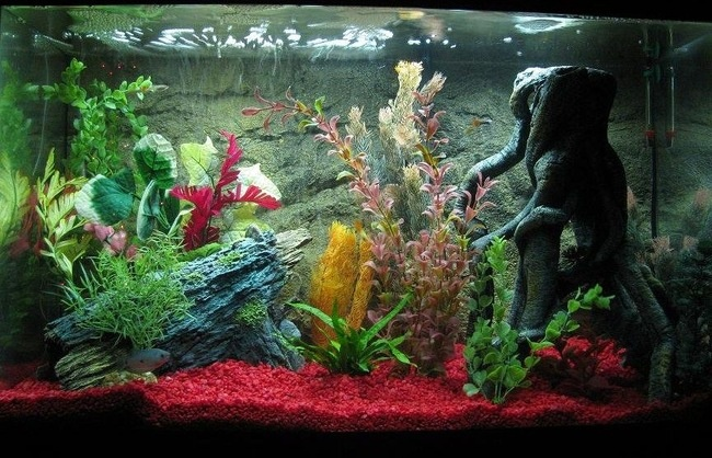 17 best images about fish tanks aquariums tropical for Fish tank pebbles