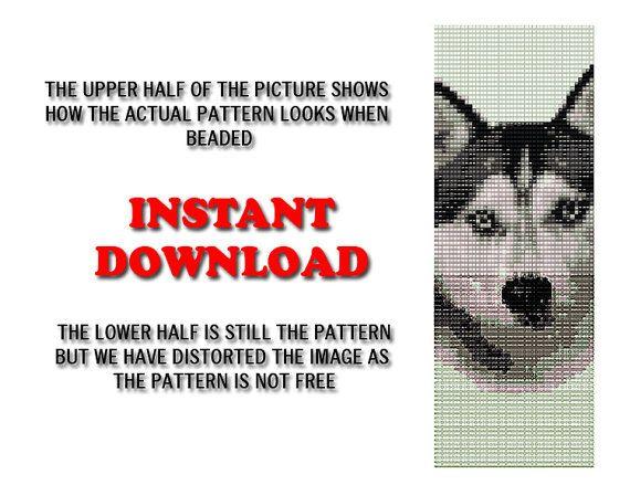 Mejores 38 imágenes de Husky en Pinterest   Malamute de alaska ...