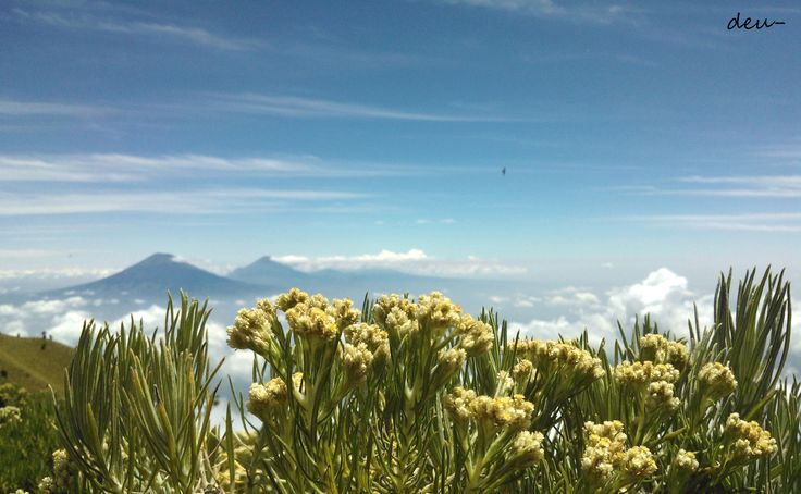 Triangulasi Peak, Mt. Merbabu 3142 MASL, Jawa Tengah, IND