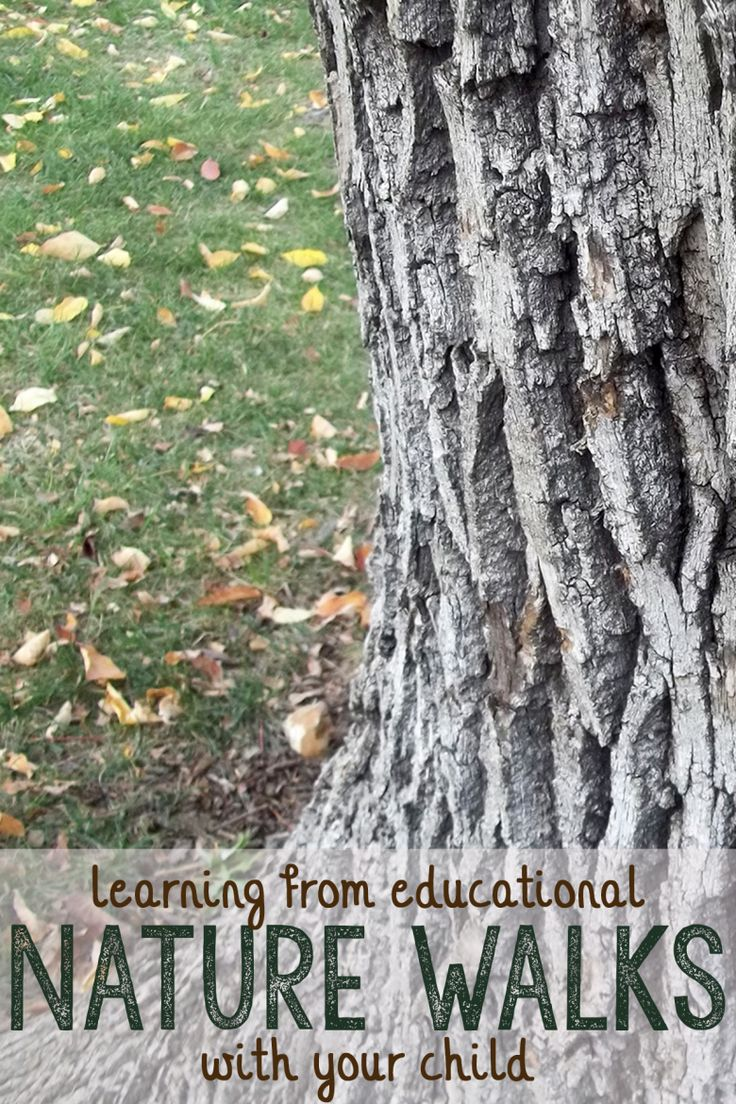 education of nature Nature's classroom is an outdoor environmental education program in  connecticut, maine, massachusetts, new hampshire, new york and rhode  island.