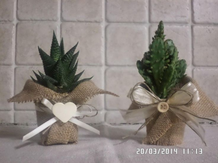 Small Cactus Plants Within Cute Pots For Decorating Your Room What you need to pay attention when you decorate with plants your home