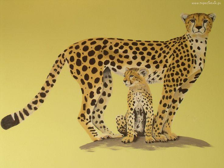 Gepard, Cętki, Rysunek