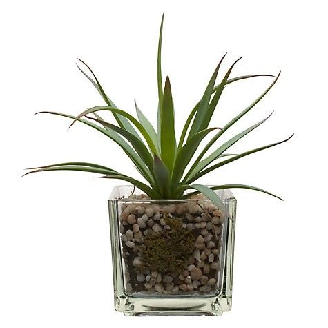 This little Alow Vera plant from John Lewis is perfect to keep your bathroom air purified. Better still it will absorb the water vapour in the air meaning you hardly ever need to water it. Why is Green is Great For Decorating? - New Home Finder