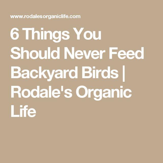 6 Things You Should Never Feed Backyard Birds Companion 400 x 300