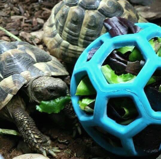 Hol-ee Roller Tortoise Foraging Toy - petdiys.com