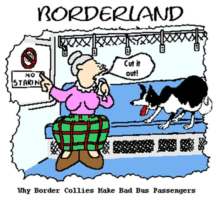 why border collies make bad passengers - Bordre Bad Bilder