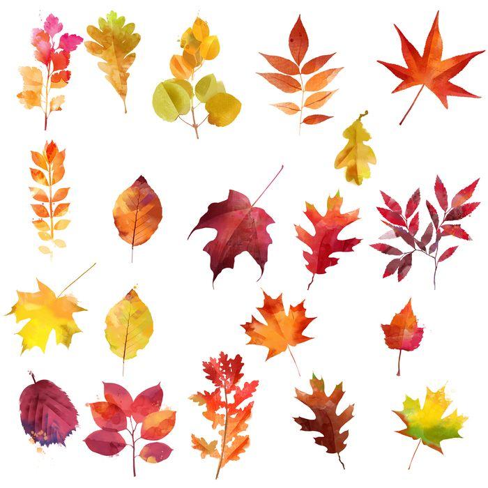 Aquarell Herbstblätter Serie
