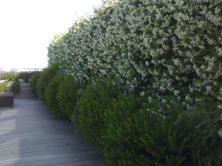 100 best Giardini e Terrazzi images on Pinterest | Landscaping ...