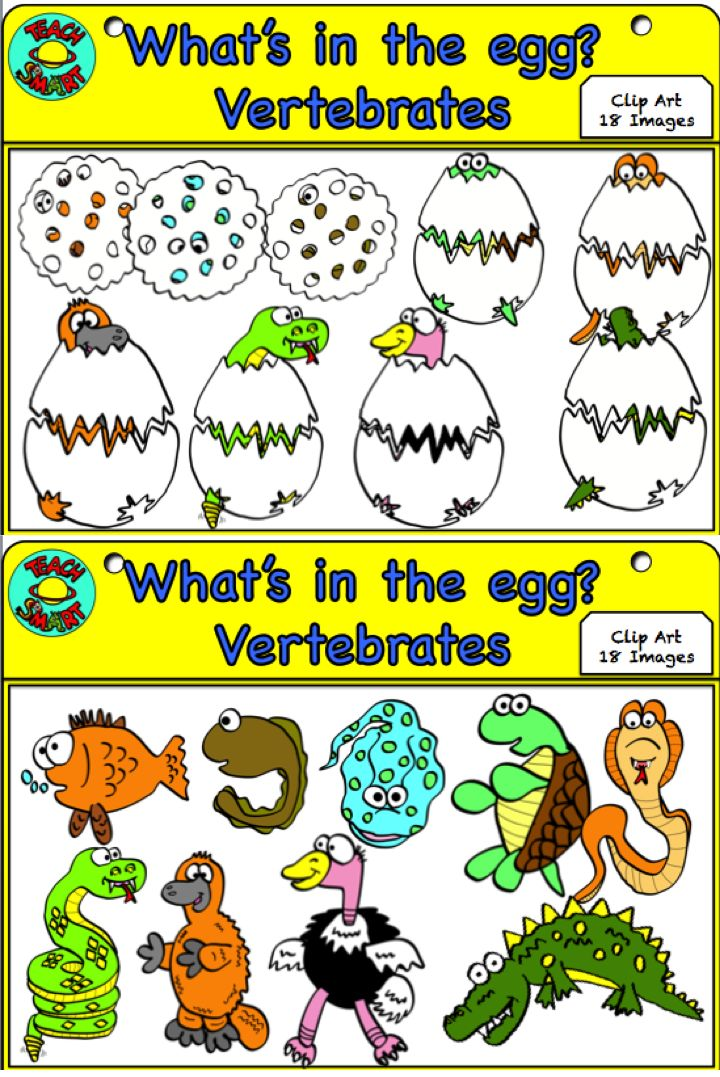 The 25+ best Examples of vertebrates ideas on Pinterest Fun food - examples of