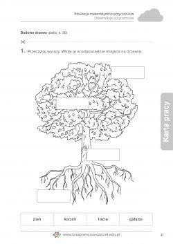Budowa drzewa | Kreatywny Nauczyciel