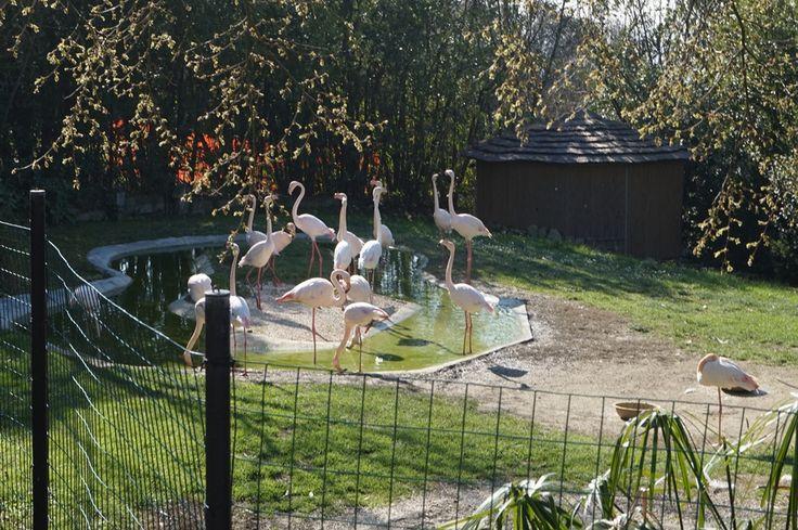 #Parco_zoo #Paese_dei_bimbi