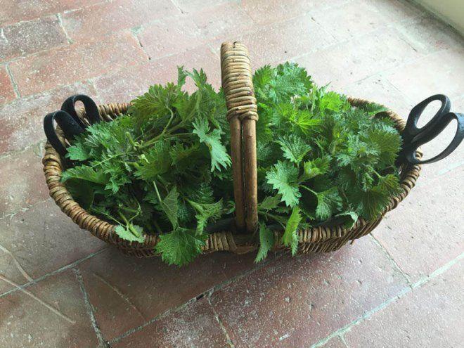 Блюда, которые можно приготовить из крапивы