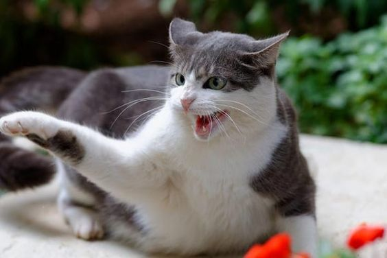6 Of The Most Common Preventable Cat Accidents And How To Avoid