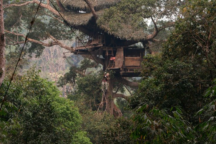 Treehouse in the Jungle – http://treehouselove.com/post/91740383704/treehouse-in-the-jungle